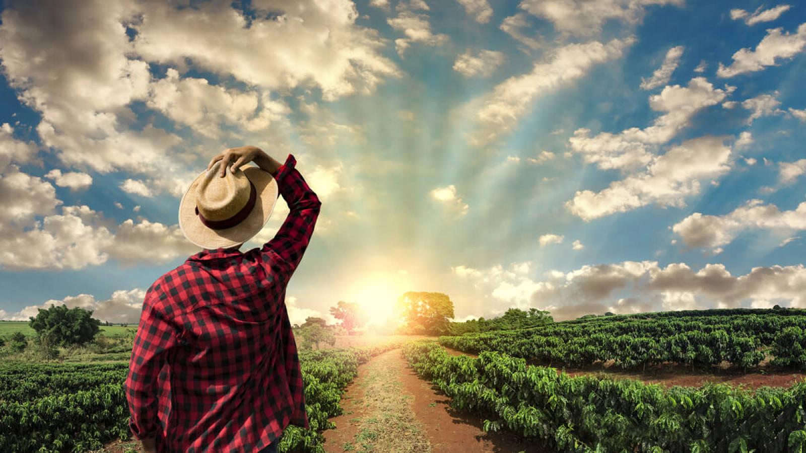 WebDFe - Produtor rural - saiba como aumentar sua renda